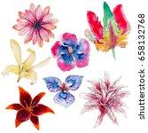 tropical flowers set ...   Shutterstock . vector #658132768