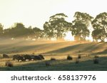 Sheep Graze On An Australian...