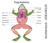 education chart of biology for... | Shutterstock .eps vector #658148125