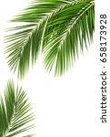 palm leaf for your design.... | Shutterstock . vector #658173928