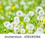 field of dandelions | Shutterstock . vector #658184386