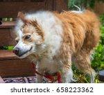 horizontal photo of a blonde... | Shutterstock . vector #658223362