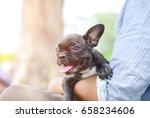 young black french bulldog dog... | Shutterstock . vector #658234606