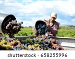 handsome young man winemaker in ... | Shutterstock . vector #658255996