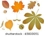acorn,autumn,beech,broadleaved,brown,buckeye,chestnut,color,conker,cultivate,dry,ecology,environment,fall,foliate