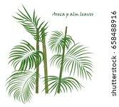 branch tropical palm areca... | Shutterstock .eps vector #658488916
