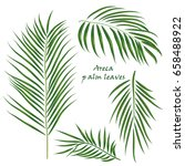 branch tropical palm areca... | Shutterstock .eps vector #658488922