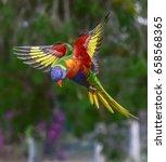 lorikeet | Shutterstock . vector #658568365