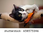 Stock photo funny black and white cat playing with a toy 658575346