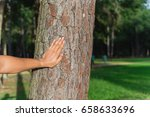 male hand places on the trunk... | Shutterstock . vector #658633696