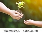 mother's hand giving young tree ... | Shutterstock . vector #658663828