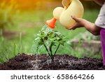 little girl watering young tree ... | Shutterstock . vector #658664266