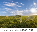 a small herd of goats crawling... | Shutterstock . vector #658681852