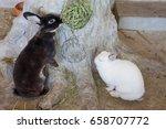 black rabbit eat dry grass... | Shutterstock . vector #658707772