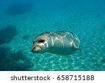 diving picture of mediterranean ... | Shutterstock . vector #658715188