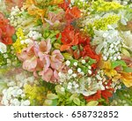 pale colored freesia flowers...   Shutterstock . vector #658732852