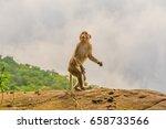 Brown Monkey Takes On Human...