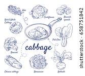 doodle set of cabbage   kale ... | Shutterstock .eps vector #658751842