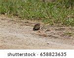 Frog, jumping Frog, Africa, Rwanda