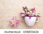 beautiful flowers aquilegia in... | Shutterstock . vector #658853626