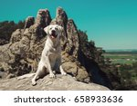 Stock photo young cute labrador retriever dog puppy on a mountain in front of blue sky 658933636