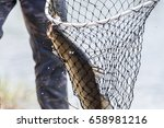 barramundi or asian sea bass in ... | Shutterstock . vector #658981216