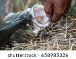 white sea bass in the fishing... | Shutterstock . vector #658985326