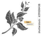 branch of tea bush with leaves...   Shutterstock .eps vector #659008438