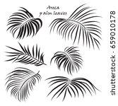 branch tropical palm areca...   Shutterstock .eps vector #659010178