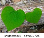 Two Heart Shaped Green Leaves...