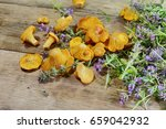 chanterelle mushrooms and thyme ... | Shutterstock . vector #659042932