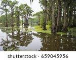 classic bayou swamp scene of... | Shutterstock . vector #659045956