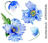 Stock photo wildflower poppy flower in a watercolor style isolated full name of the plant poppy papaver 659054446