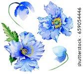 wildflower poppy flower in a...   Shutterstock . vector #659054446