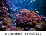 tropical fish on a coral reef | Shutterstock . vector #659057812
