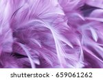 purple chicken feathers in soft ... | Shutterstock . vector #659061262