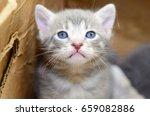 kitten in cardboard box | Shutterstock . vector #659082886
