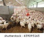 Many turkey in a farm  prepare...