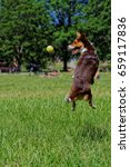Dog Leaping To The Ball
