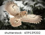 the tawny owl or brown owl ... | Shutterstock . vector #659139202