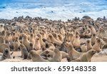 cape cross seal reserve in the... | Shutterstock . vector #659148358