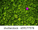 top view of single purple... | Shutterstock . vector #659177578