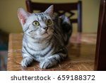 cat action close up | Shutterstock . vector #659188372
