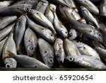 freshly caught fish | Shutterstock . vector #65920654