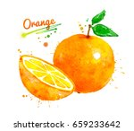 hand drawn watercolor whole and ... | Shutterstock . vector #659233642
