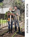 couple picking vegetables in... | Shutterstock . vector #659261956