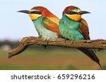 pair european bee eater sitting ... | Shutterstock . vector #659296216