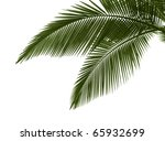green palm leaves isolated on... | Shutterstock . vector #65932699