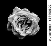 Stock photo black and white photo of a rose 659400802