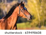 Stock photo horse profile portrait side view 659498608